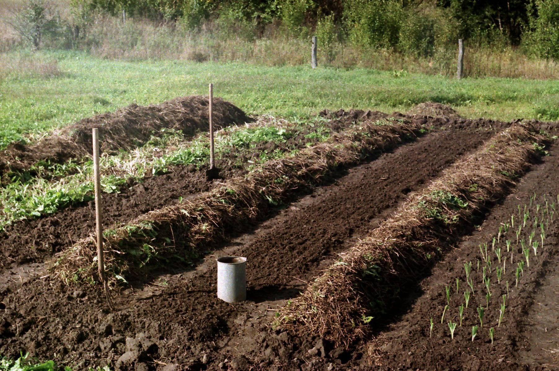 Подготовка почвы для посадки клубники осенью