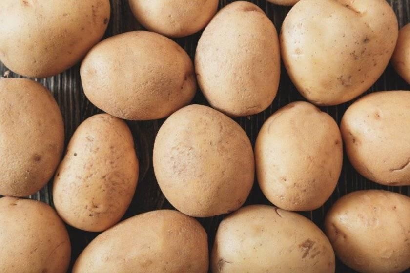 Сорт картофеля молли: описание, посадка и уход