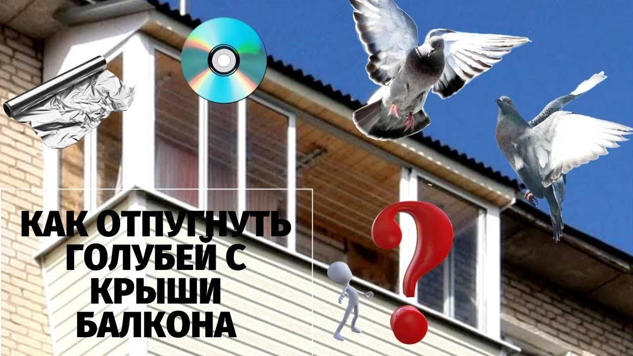 Как навсегда прогнать голубей с балкона – проверенные способы отпугивания птиц