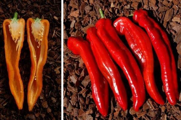 Перец сладкий рамиро. внешние признаки, положительные и отрицательные стороны, выращивание