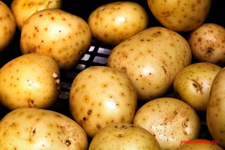 Какими болезнями страдает картофель: обезвреживаем врагов!