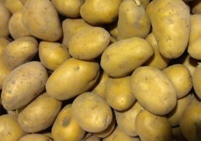 Картошка гранада — что это за сорт, описание