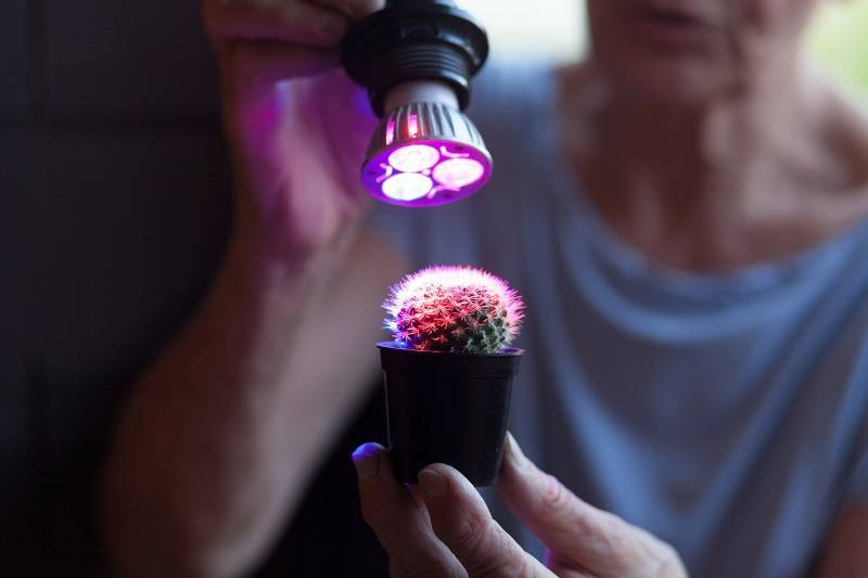 Какие лампы для растений нужны в теплицу и комнату