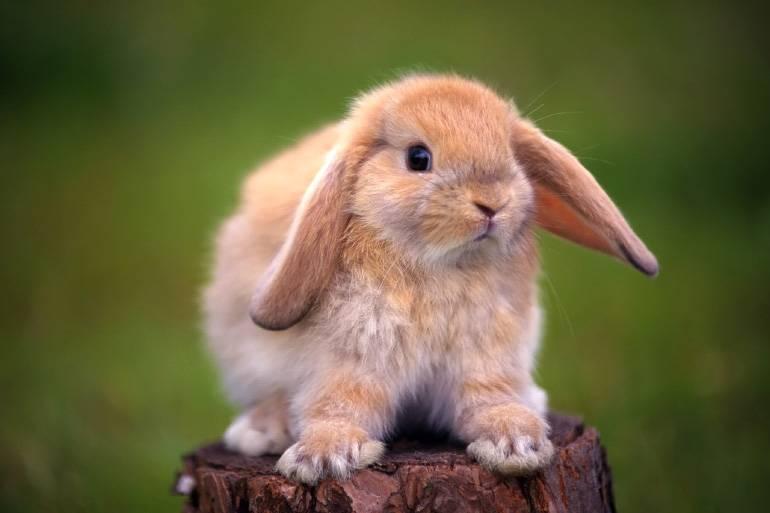 Болезни кроликов: виды заболеваний, симптомы, лечение.