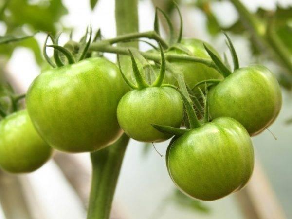 Сорт помидоров афродита: описание и фото