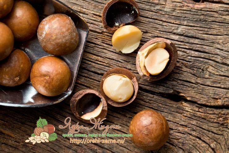 Орех макадамия – полезные свойства для организма и противопоказания