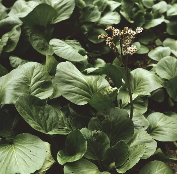 Безвременник осенний (44 фото): посадка и уход за травянистым растением в открытом грунте, описание и выращивание цветка колхикум. на какую глубину нужно сажать?