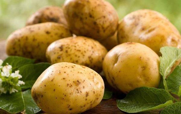 Описание и характеристика картофеля сорта киви, правила посадки и ухода