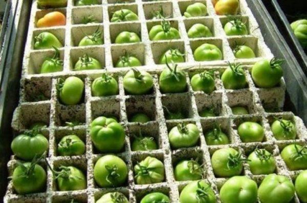 Как хранить зеленые помидоры чтобы они покраснели в домашних условиях на зиму, при какой температуре?