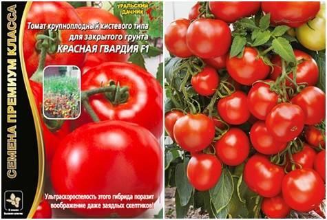 Канопус томат отзывы фото