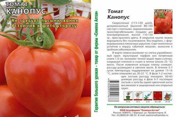 Томат канопус: характеристика и описание сорта, фото, отзывы, урожайность, видео
