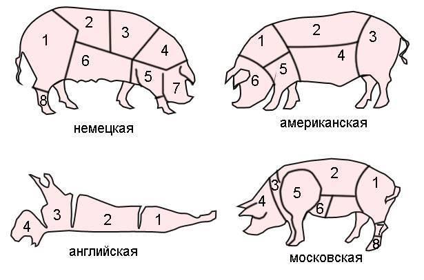 Разделка свиной туши с описанием частей