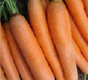 Морковь специального назначения