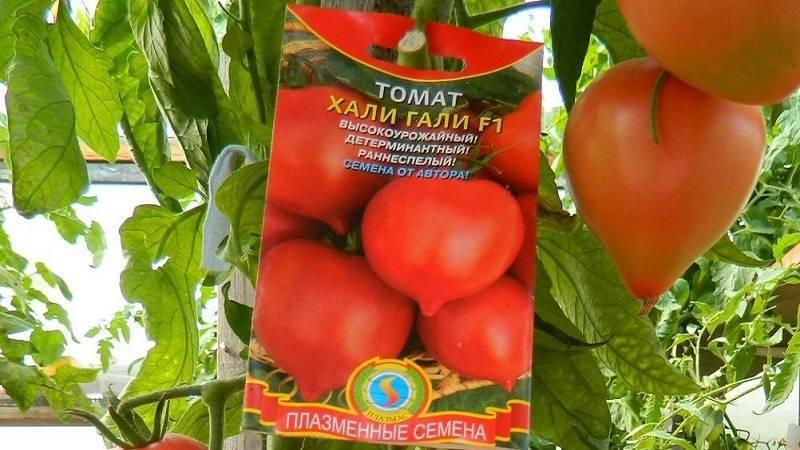 Томат хали гали отзывы фото урожайность