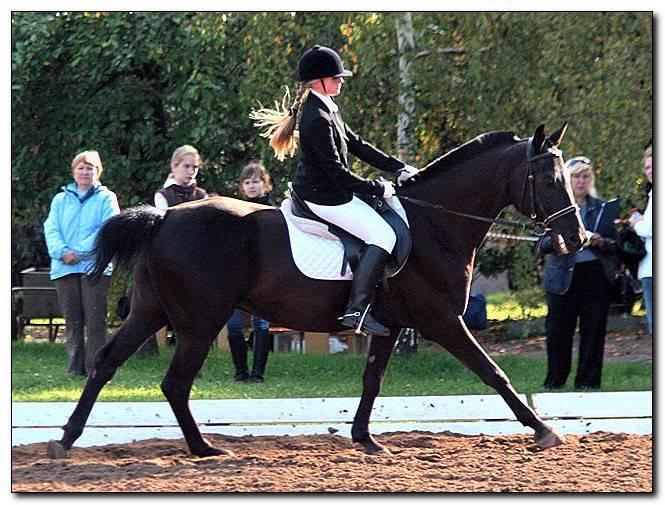 Голштинская лошадь - вики