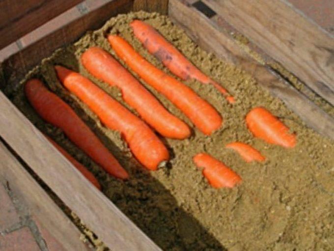 Как хранить морковь в погребе зимой: в пакетах, мешках, песке