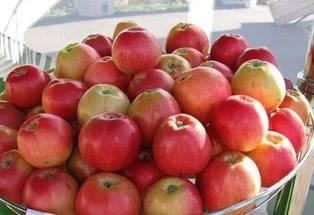 Яблоня пепин шафранный: описание сорта и фото