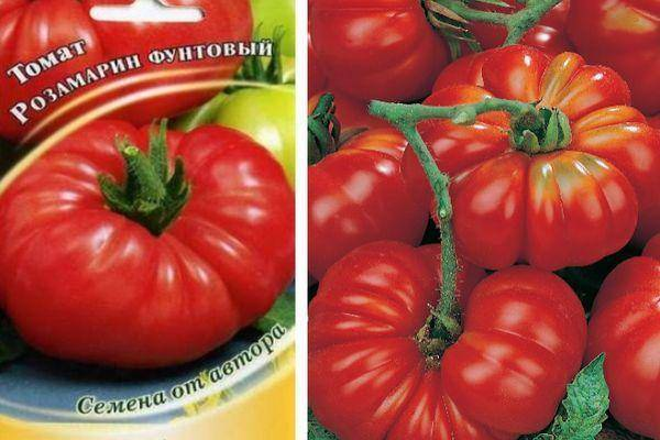 Диетические помидоры с замечательным вкусом — томат розамарин фунтовый: описание сорта и его характеристики