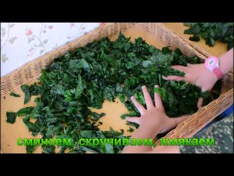 Как ферментировать листья смородины в домашних условиях