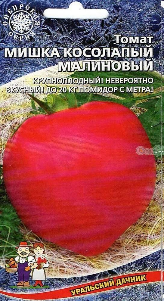 Сортовые особенности томата мишка косолапый
