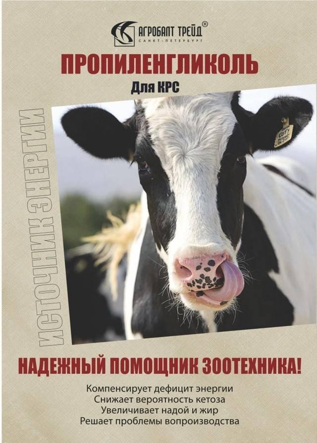 Лечение кетоза у коров