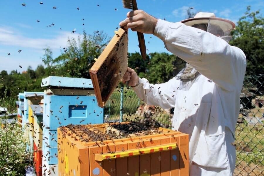 Как сделать отводок пчел без матки: пошаговая инструкция и рекомендации