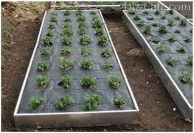 Укрывной материал от сорняков: обзор видов покрытий + специфика их применения