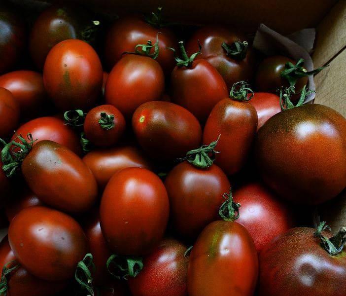 Томат черная гроздь: описание, выращивание, защита, отзывы