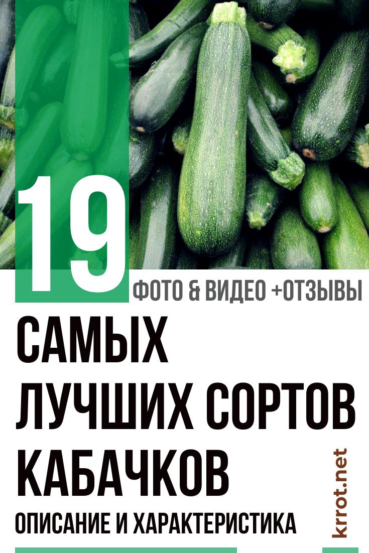 Сорта кабачков