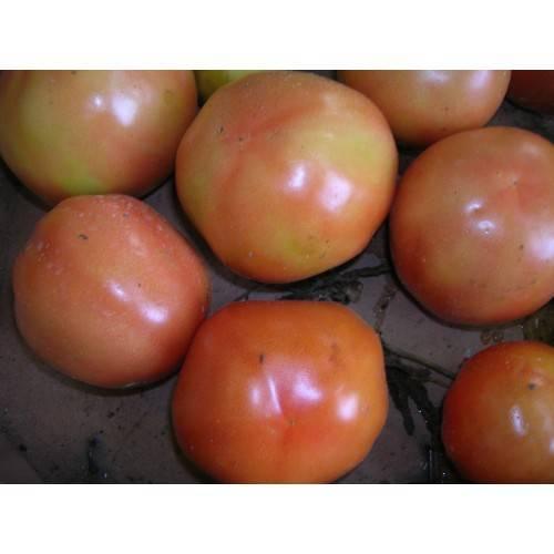 Томат адамово яблоко