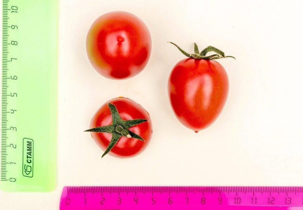 Пасынкование томатов черри