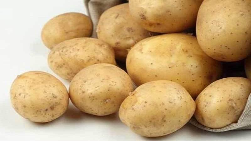 Сорт картофеля «адретта»: характеристика, описание, урожайность, отзывы и фото