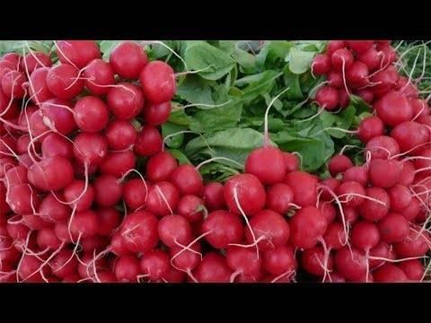 Завораживающие внешним видом плоды-биколоры с потрясающим вкусом: томат «мечта алисы»