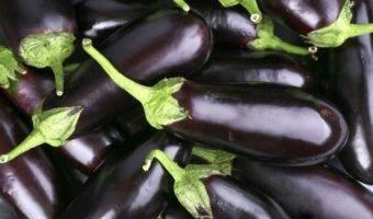 Баклажан фиолетовое чудо — описание сорта, фото, отзывы, посадка и уход