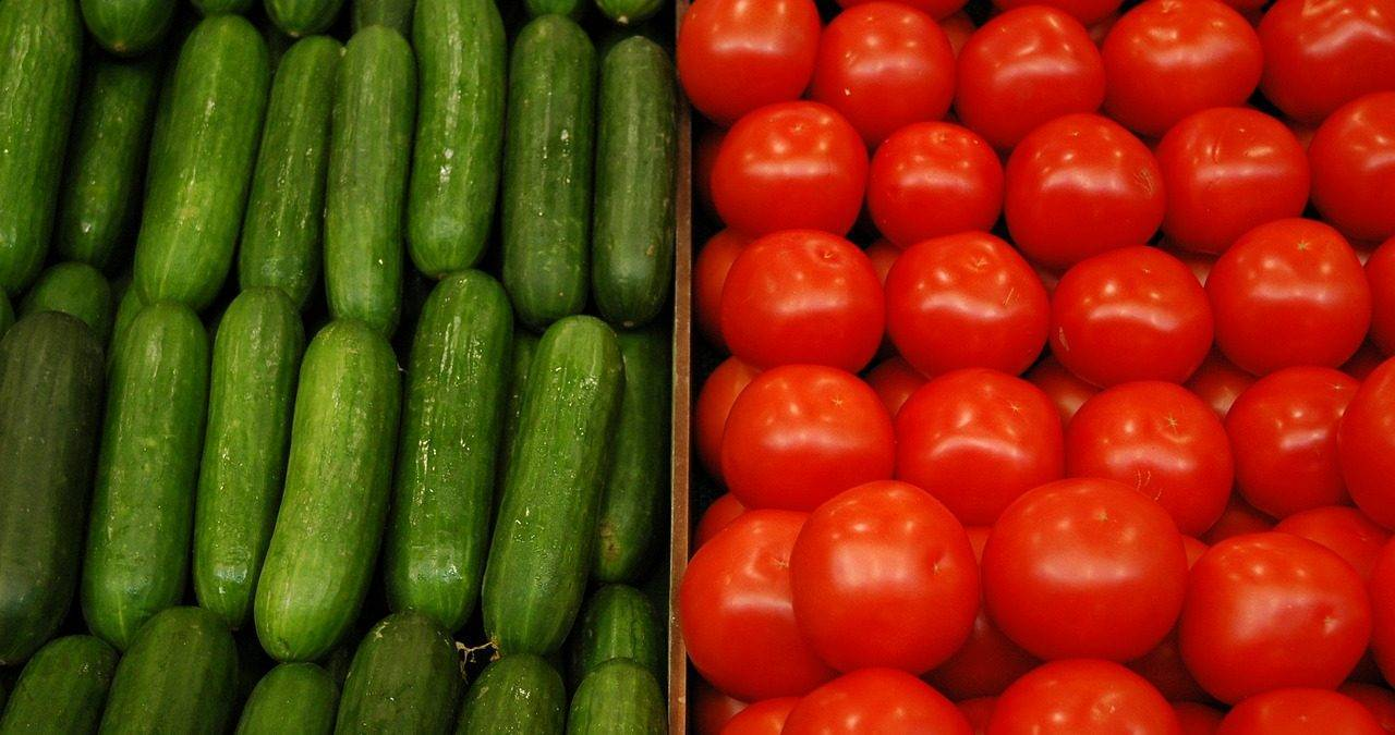 Подкормка дрожжами томатов и огурцов: рецепт и правила применения, отзывы