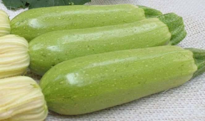 Кабачок искандер f-1: секреты большого урожая