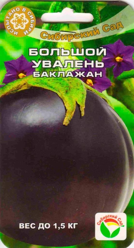 Баклажан «большой увалень» — овощ, в котором необычно все