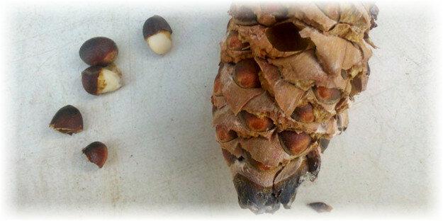 Как правильно почистить кедровые орехи в домашних условиях
