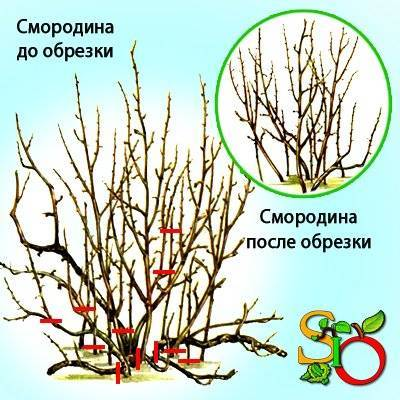 Подкормка груши весной и осенью. как подкармливать?
