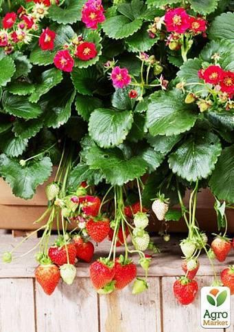 Земляника тоскана: сортовая характеристика, меры борьбы с листоверткой, отзывы садоводов, фото, видео