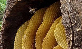Колода для пчел, как сделать своими руками?