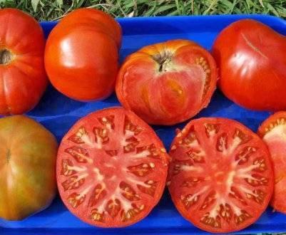 Томат диаболик f1: описание и характеристика сорта, урожайность с фото