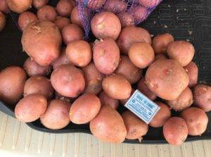 Сорт картофеля «ред соня (red sonia)» – описание и фото