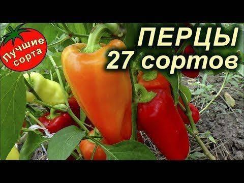 Лучшие сорта болгарского перца для сибири