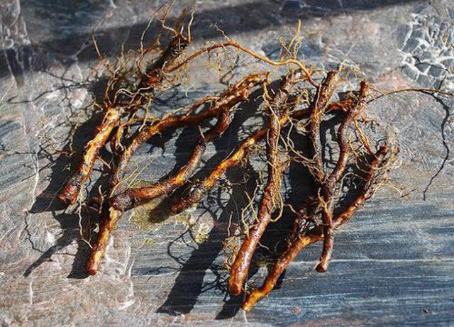 Боярышник крупноплодный – все способы выращивания
