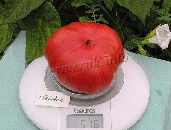 Томат медовый салют: характеристика и описание сорта, выращивание