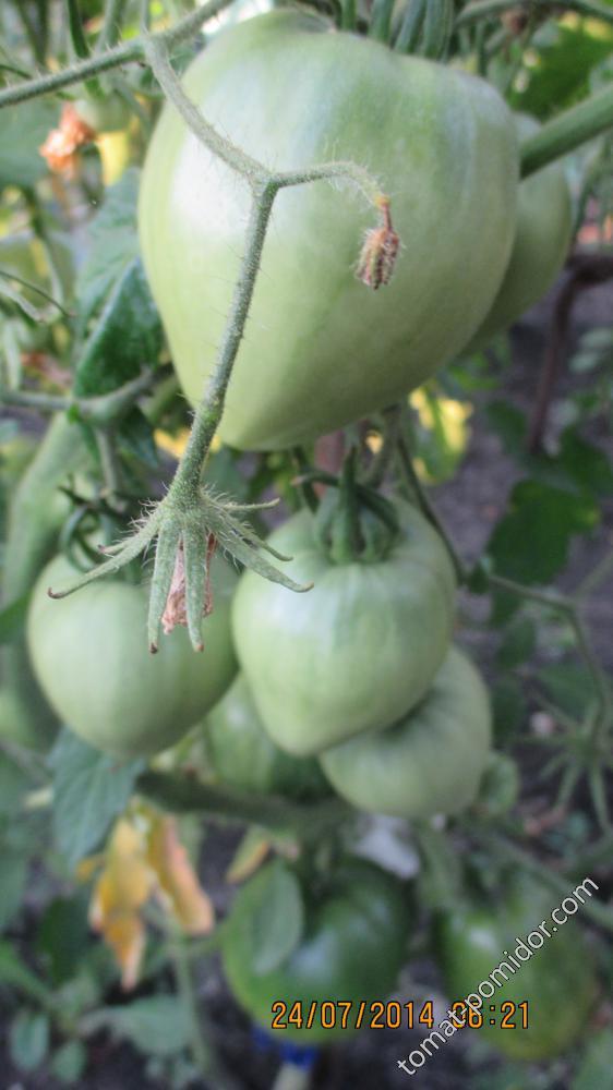 Томат тяжеловес сибири: описание и характеристика сорта, отзывы дачников с фото