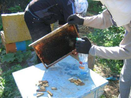 Что такое декристаллизация меда: как сделать