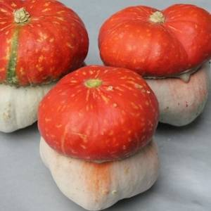 Особенности выращивания и использования декоративных сортов тыквы