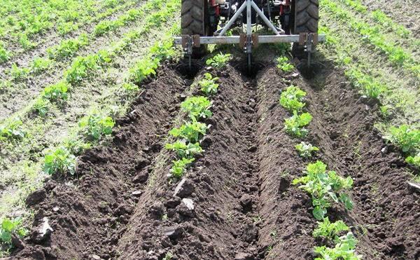 Посадка картофеля мотоблоком с окучником